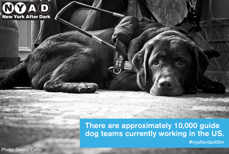 10,000 Guide Dog Teams
